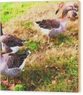Geese In The Yard Wood Print