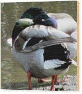 Geese Lovers Wood Print