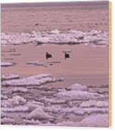 Geese On Lake Huron At Sunset Wood Print