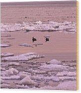 Geese On Lake Huron At Sunset Wood Print by Kathy DesJardins