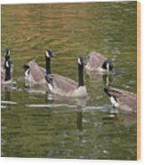 Geese On Pond Wood Print