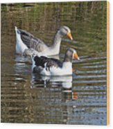 Geese On The Canal   Wood Print