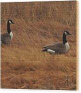 Geese On The Salt Marsh  Wood Print