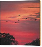 Geese On Their Sunset Arrival Wood Print