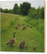 Geese Walk Wood Print