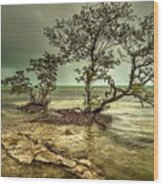 Geiger Key Shoreline Wood Print