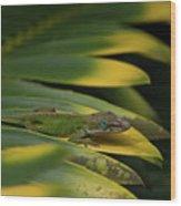 Gekco On Palm  Leaf Wood Print