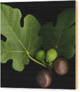 Gelini's Fig Tree Wood Print