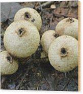 Gem-studded Puffball Mushroom Wood Print