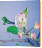 Gentle Apple Tree Flowers Wood Print