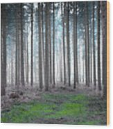 Gentle Dawn Wood Print by Svetlana Sewell