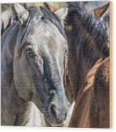 Gentle Face Of A Wild Horse Wood Print