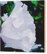 Gentle Floral Wood Print