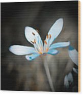 Gentle Wood Print