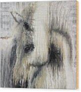 Gentle White Horse Wood Print