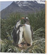 Gentoo Penguin And Young Chicks Wood Print by Suzi Eszterhas