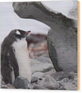Gentoo Penguin Chick Under Whale Vertebrae Wood Print