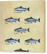 Genus Oncorhynchus Wood Print by Logan Parsons