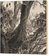 Georgia Live Oaks And Spanish Moss In Sepia Wood Print