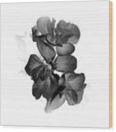 Geranium Black Wood Print