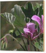 Geranium Blossom Wood Print