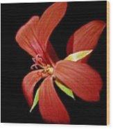 Geranium Flower Wood Print