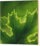 Geranium Leaf Wood Print