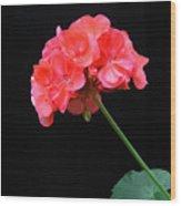 Geranium Wood Print by Linda Vespasian