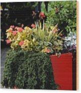 Geraniums And Gelato Wood Print