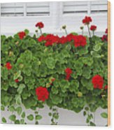 Geraniums On Window Wood Print by Elena Elisseeva