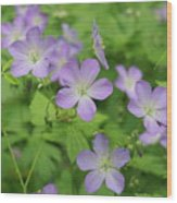 Geraniums Spring Wildflowers Wood Print