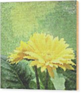 Gerber Daisy And Reflection Wood Print