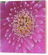 Gerber Daisy - Sweet Memories 01 Wood Print