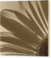 Gerber Flower Wood Print