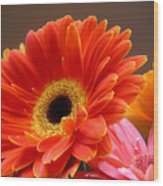 Gerbera Daisies - Luminous Wood Print