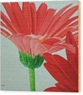 Gerbera Daisies Wood Print