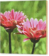 Gerbera Daisies To Brighten Your Day Wood Print