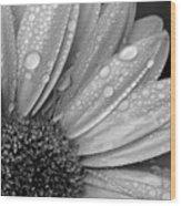 Gerbera Daisy After The Rain 2 Wood Print