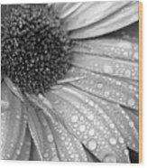 Gerbera Daisy After The Rain 3 Wood Print