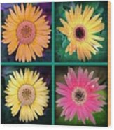 Gerbera Daisy Collage In Square Wood Print