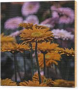 Gerbera Daisy Garden Wood Print