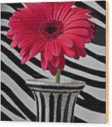 Gerbera Daisy In Striped Vase Wood Print