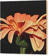 Gerbera Daisy On Black Wood Print