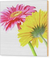 Gerbera Flowers Wood Print by Carlos Caetano