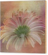 Gerbera From The Back Wood Print