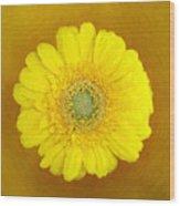 Gerbera - Id 16235-220247-8361 Wood Print