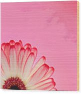 Gerbera Pink Wood Print