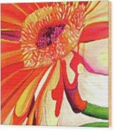 Gerbera Wood Print