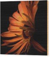 Gerbera Set On Black Wood Print
