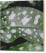 Lungwort Wood Print